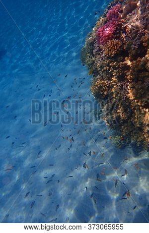 Coral Reef In Egypt, Makadi Bay