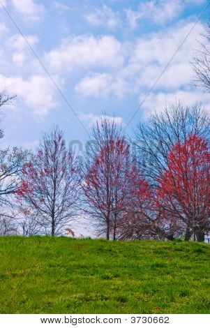 Springtime Hillside