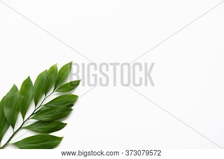Nature Minimal Background. Organic Design. Single Green Exotic Leaves Branch Isolated On White Copy