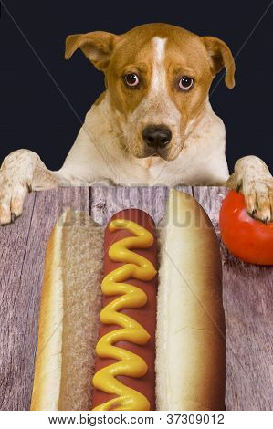Hungry dog looking at big juicy dog. poster