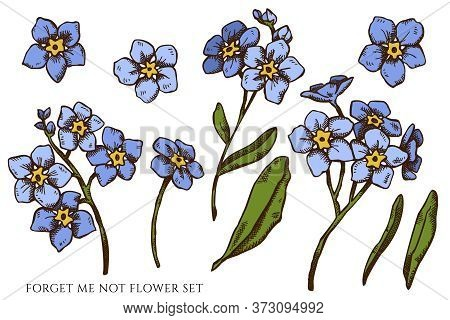 Vector Set Of Hand Drawn Colored Forget Me Not Flower Stock Illustration