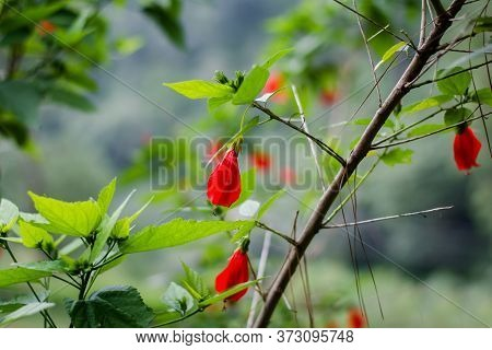 Colorful Flowers Of Botanical Garden And Rose Garden Of Ooty Tamilnadu India