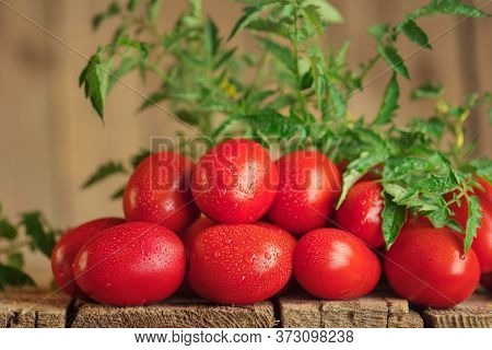 Summer Agriculture Fresh Plum Tomatoes. Group Of Paste Tomatoes. Fresh Long Tomato On A Wooden Table