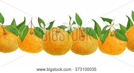 Watercolor Hand Drawn Seamless Horizontal Border Illustration Of Bright Orange Tangerine Mandarine C