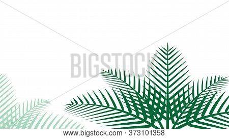 Coconut Leaf Simple For Background, Illustration Of Coconut Leaves, Palm Stalk, Copy Space
