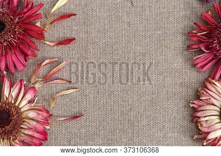 Framing Of Dry Gerbera Flowers On Linen Fabric With A Free Place For Text. Dry Red Flowers On Natura