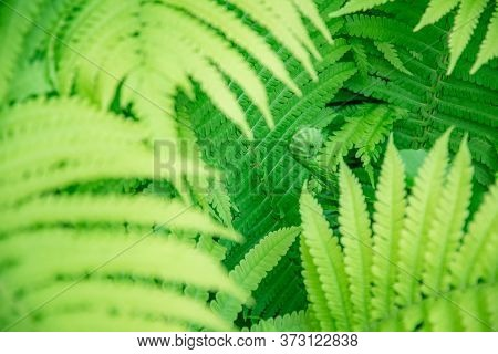 Tropical Blur Background Of Organic Plant Leaves With Sunflares On Foreground. Exotic Fern Jungle Te