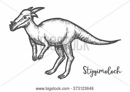 Pachycephalosaurus Dinosaur Or Stygimoloch Vector Sketch Tatoo