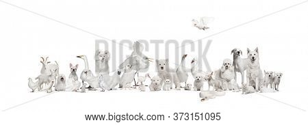 Group of white animals in a row, pet and wild, isolated