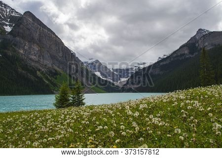 Meadow With Dandelions In Lake Louise, Banff National Park, Alberta, Canada