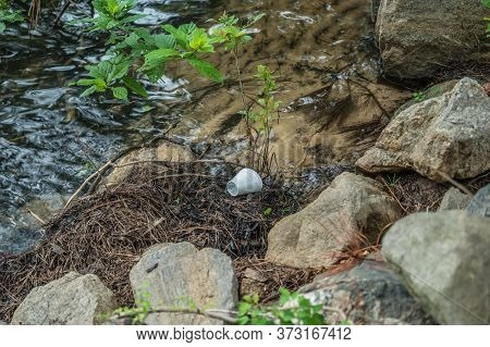 A Discarded Styrofoam Beverage Cup Lying On The Shoreline At The Lake On A Pile Of Pine Needles By T