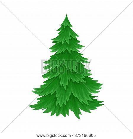Evergreen Coniferous Fir Tree With Exuberant Foliage Vector Illustration