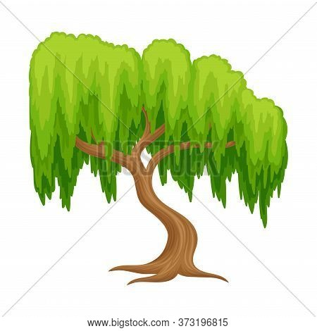 Willow Tree With Exuberant Green Foliage And Trunk Vector Illustration