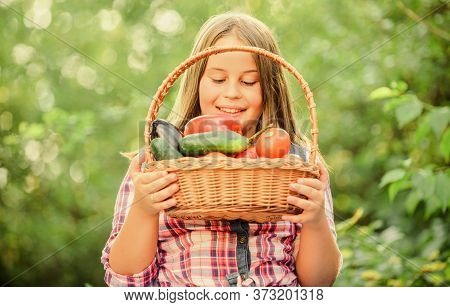 Healthy Homegrown Food Concept. Eat Healthy. Summer Harvest Concept. Gmo Free. Kid Gathering Vegetab