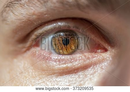 Male Brown Eyes, The Iris And The Pupil, Close-up.