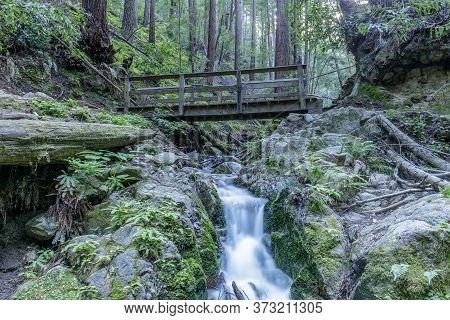 Fall Creek At Henry Cowell Redwoods State Park. Felton, Santa Cruz County, California, Usa.