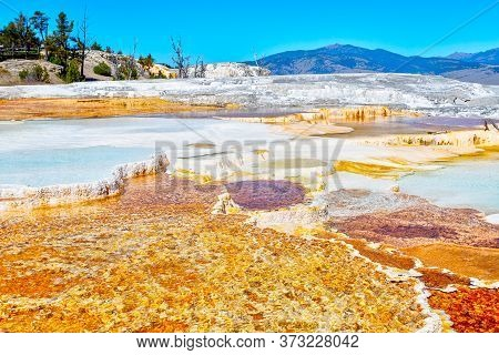 Close Up Of The Volcanic Canary Spring Thermal Area Of Main Terrace At Mammoth Hot Springs In Yellow