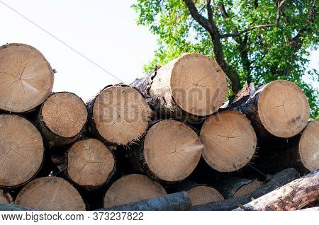 Cut Tree Trunks Stacked Up On A Farmyard To Dry