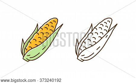 Set Of Fresh Corn In Cob Colorful Line Art And Outline Monochrome Style. Natural Organic Seasonal Ve