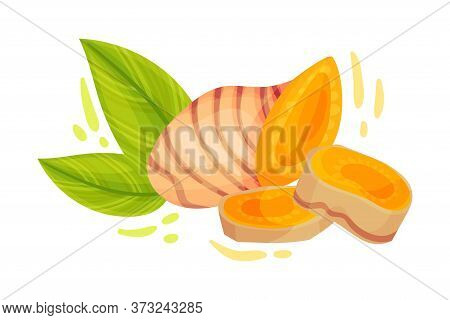 Turmeric Rhizome Or Root Isolated On White Background Vector Illustration
