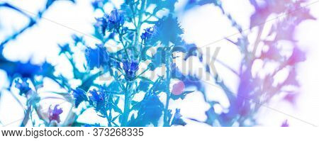 Closeup Of Blue Blossomed Flower With Blue Sky Background