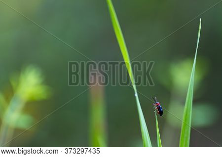 Little Bug Sitting On Top Of A Grass Blade