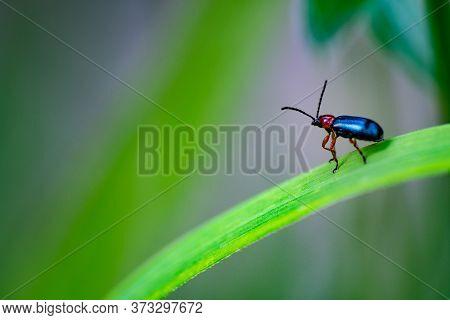 Bug Sitting On A Grass Blade Enjoying The View