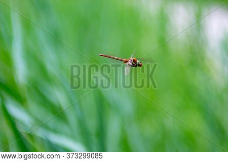 Dragonfly Mid-air With Blurred Grass In The Background