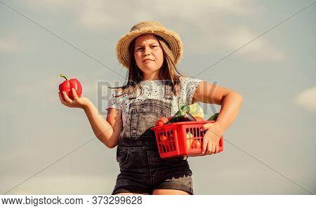 Kid Work At Farm. Harvest Season. Child Carry Harvest. Buy Organic Food. Sunny Day At Farm. Vegetabl