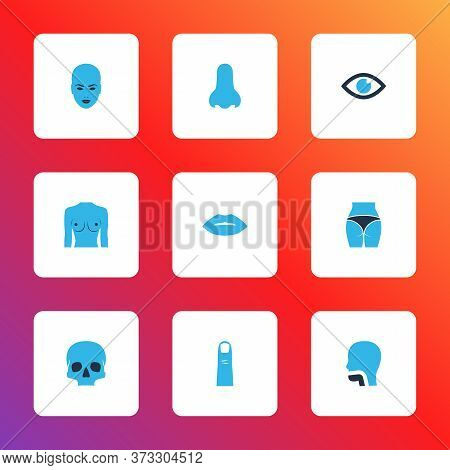 Part Icons Colored Set With Eye, Breast, Lips And Other Boob Elements. Isolated Vector Illustration