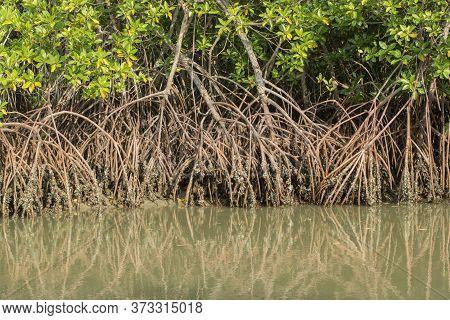 Thailand Phetburi Mangrove Forest