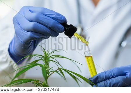 The Hand Of A Doctor Or Researcher Is About To Drip Hemp Oil In A Glass Bottle. Medical Concept The