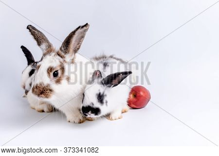 Family Three Cute Rabbits, White Furry And Long Brown Ears On White Background, To Pet And Animal Co
