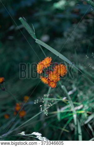 A Beautiful Orange Flower Deep In The Forrest