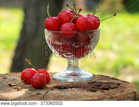 Against The Background Of The Summer Garden, A Glass Vase Filled With Red Ripe Cherries Stands On A