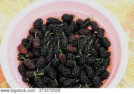 A Plastic Bowl With Fresh Juicy Mulberry.