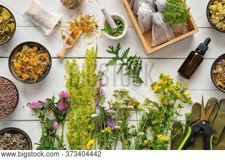 Medicinal Plants, Bowls Of Dry Medicinal Herbs, Tea Bags, Dropper Bottle Of Essential Oil, Pruner An