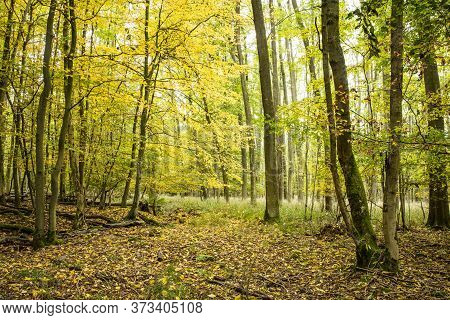 Beautiful Forrest In Summer In Germany. Outdoor