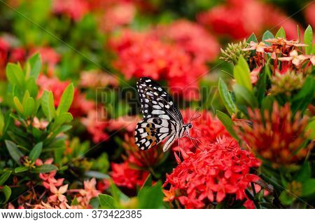 Colorful Butterfly Sucking Nectar Of Spike Flowers With Fresh Green Background.