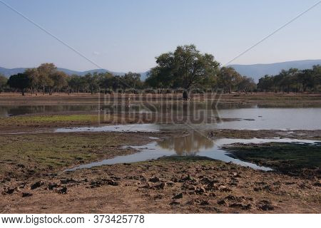 Landscape View Of The Long Pool With Wildlife And Blue Sky In Mana Pools National Park, Zimbabwe