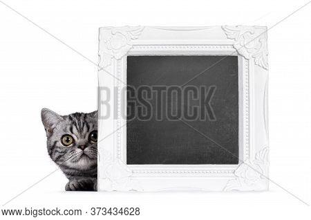 Cute Junior Silver Tabby British Shorthair Cat, Laying Down, Peeping Around Corner Of Blackboard Fil