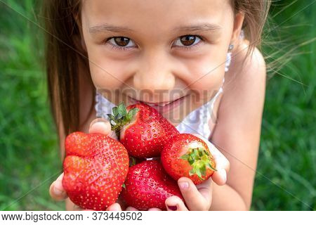Little Beautiful Child Stretches Strawberries In Her Hands And Smiles. Adorable White Girl With Long
