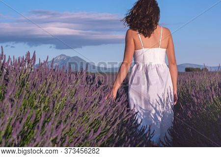 Summertime In Lavender. Young Beautiful Woman In Lavender Flowers Field At Sunset In White Dress. Pr