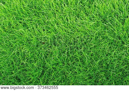 Green Grass Texture Background, Top-down Of Grass Garden, Ideal Concept Used For Making Green Floori