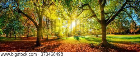 Colorful Panoramic Autumn Landscape In A Scenic Park. The Sun Is Positioned In The Middle And Casts