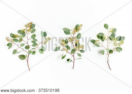 Set Of Eucalyptus Leaves And Eucalyptus Branches With Fruits In The Form Of Berries On White Backgro