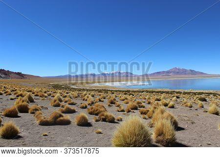 Tara Salt Flat (salar De Tara), Atacama Desert, Chile