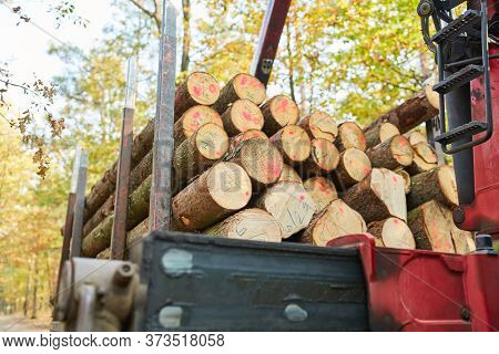 Long wood stack on the long wood cart during the wood harvest in the forestry