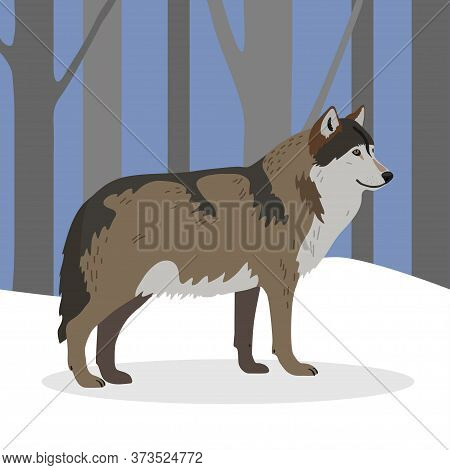Gray Wolf In A Realistic Style In The Winter Forest. The Wolf Is Walking In The Forest. Winter Scene