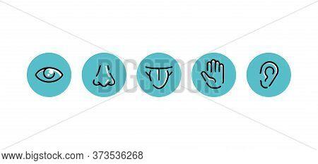 Five Basic Human Senses - Touch, Sight, Hearing, Smell And Taste - Sensing Organs - Eye, Mouth, Ear,